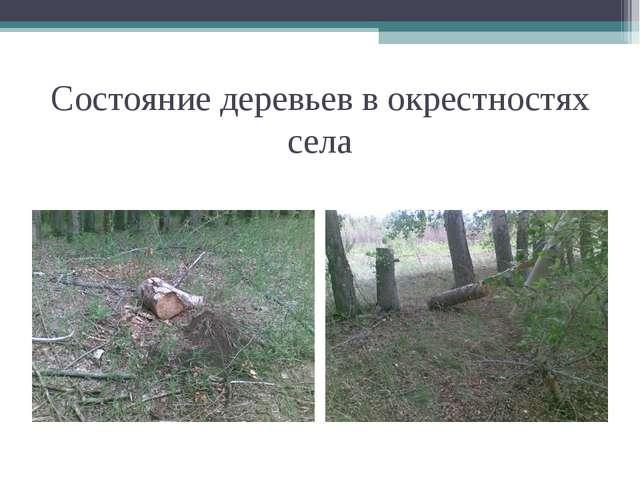 Состояние деревьев в окрестностях села