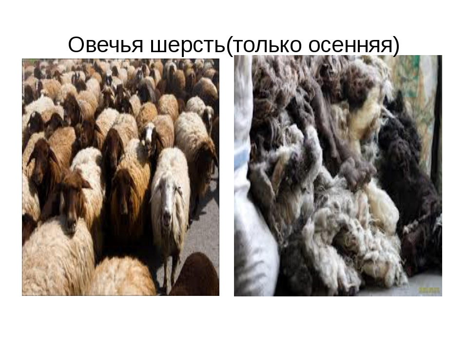 Овечья шерсть(только осенняя)