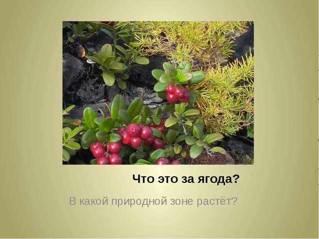 Что это за ягода? В какой природной зоне растёт?