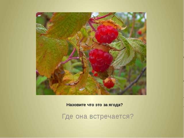 Назовите что это за ягода? Где она встречается?