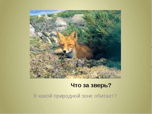 Что за зверь? В какой природной зоне обитает?
