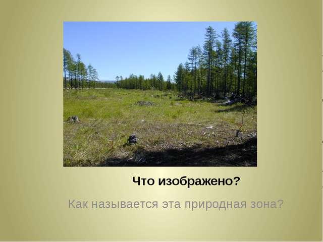 Что изображено? Как называется эта природная зона?