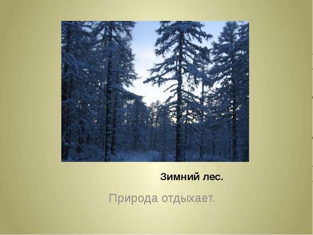 Зимний лес. Природа отдыхает.