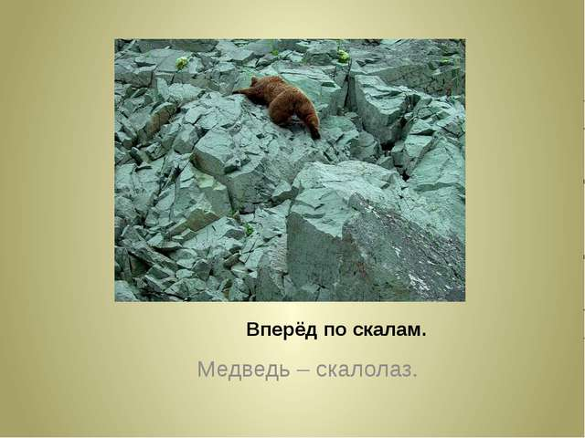 Вперёд по скалам. Медведь – скалолаз.