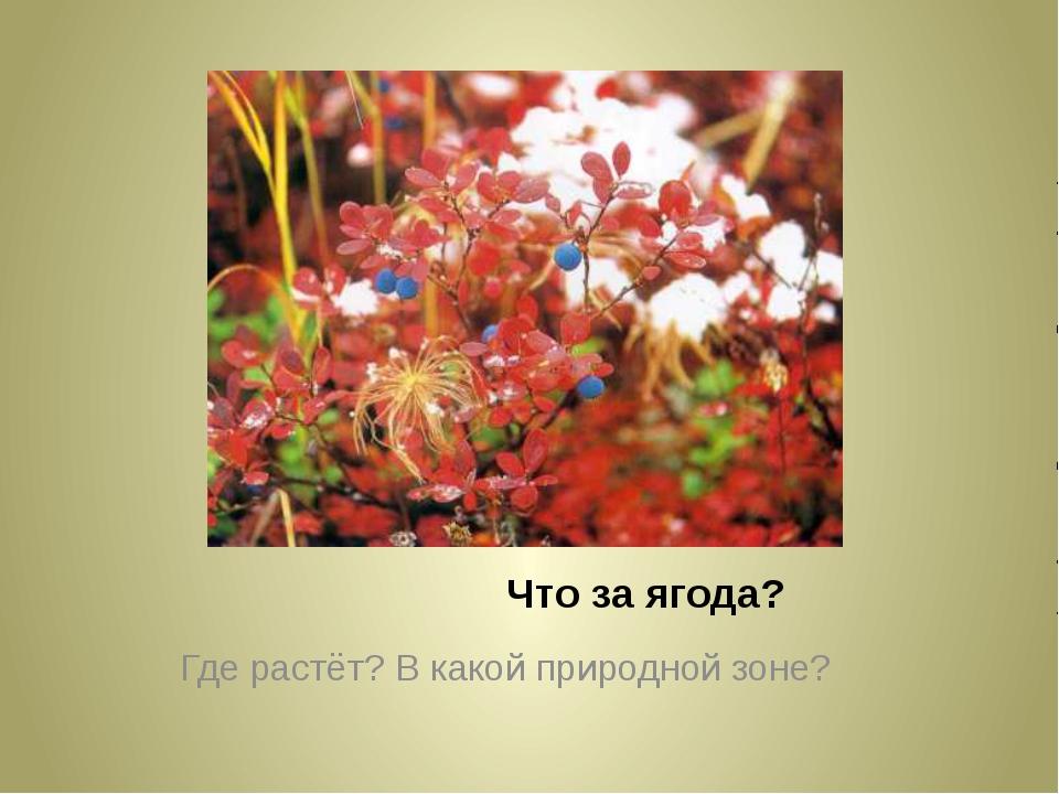 Что за ягода? Где растёт? В какой природной зоне?