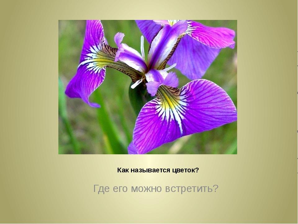 Как называется цветок? Где его можно встретить?