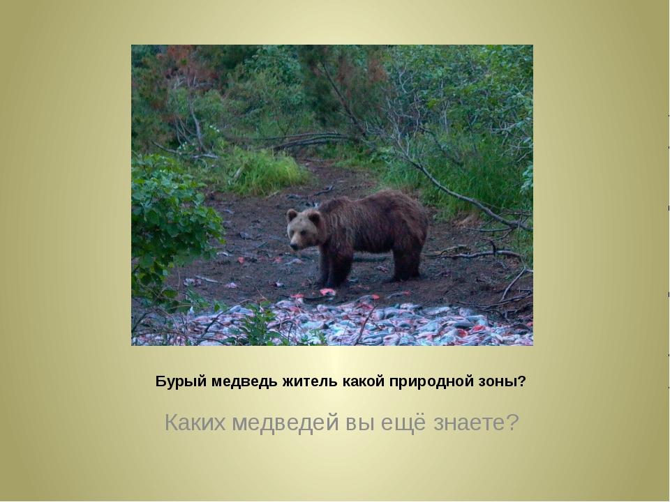 Бурый медведь житель какой природной зоны? Каких медведей вы ещё знаете?