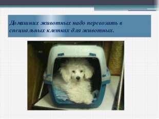 Домашних животных надо перевозить в специальных клетках для животных.
