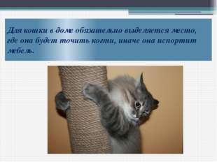 Для кошки в доме обязательно выделяется место, где она будет точить когти, ин