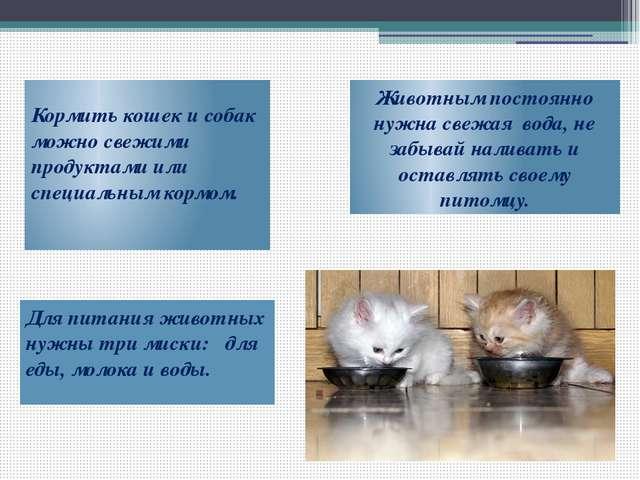 Кормить кошек и собак можно свежими продуктами или специальным кормом. Животн...