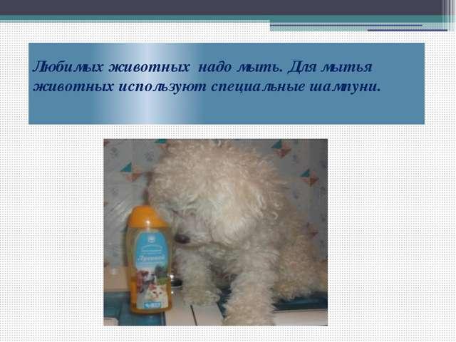 Любимых животных надо мыть. Для мытья животных используют специальные шампуни.
