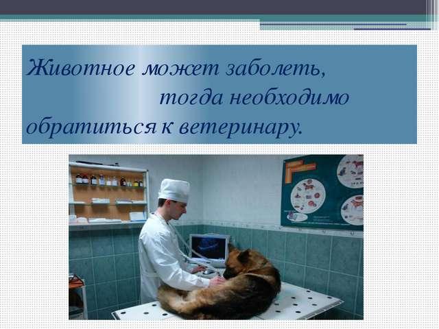 Животное может заболеть, тогда необходимо обратиться к ветеринару.