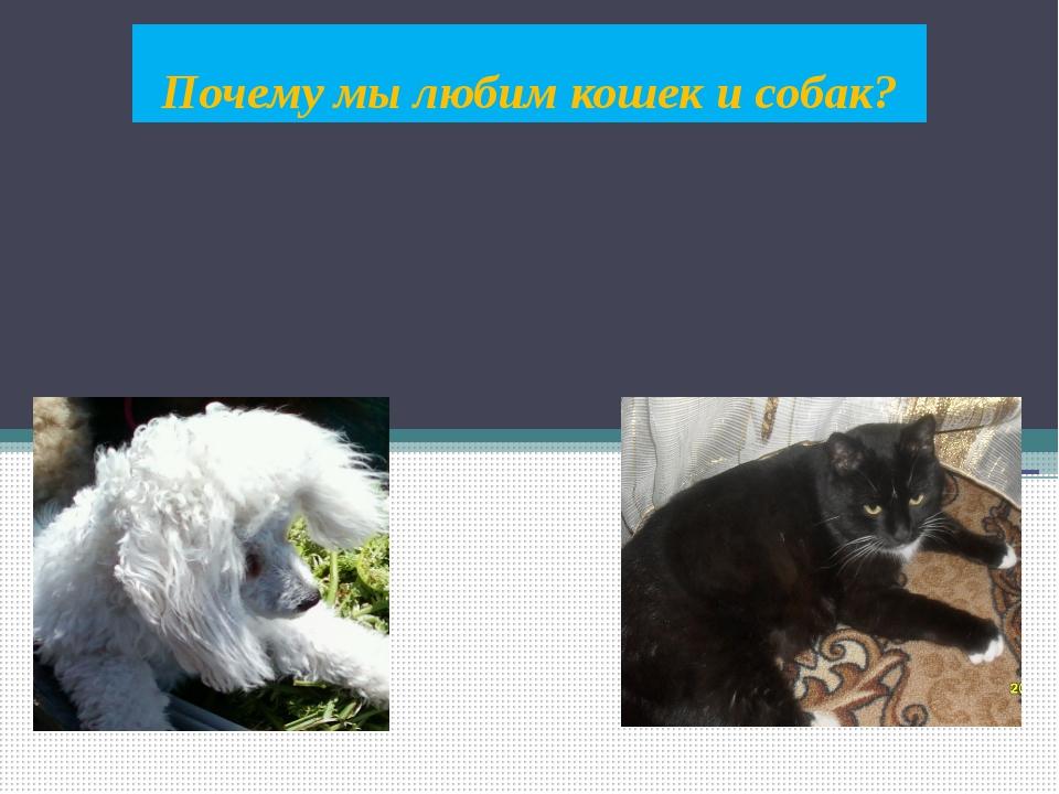 Почему мы любим кошек и собак?