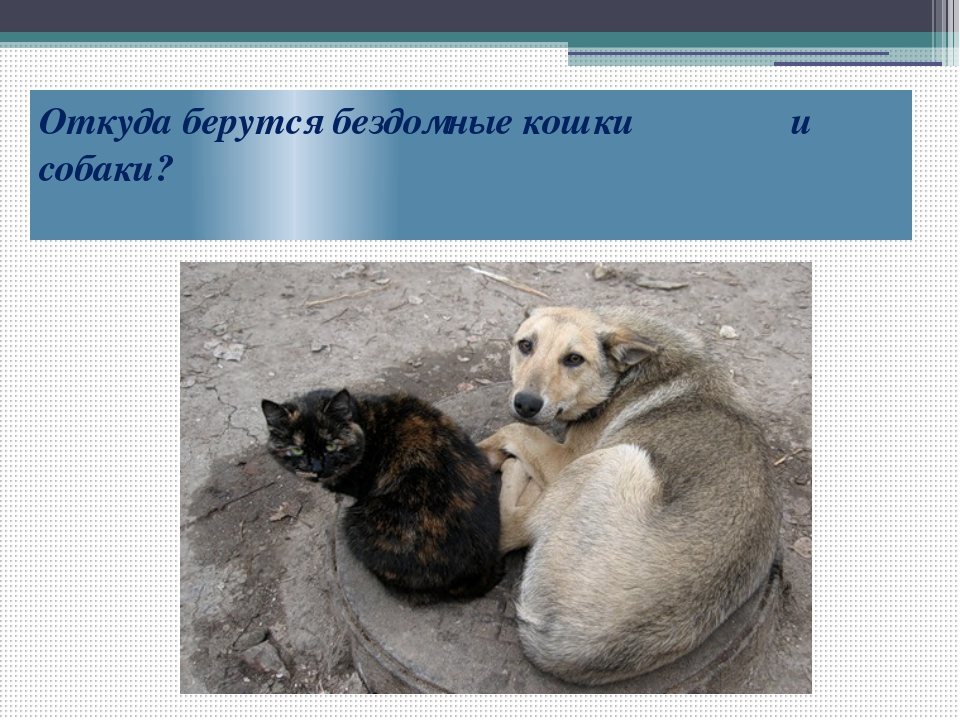 Откуда берутся бездомные кошки и собаки?