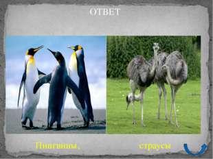 А 30 Удивительный мир животных Какие птицы покрыты перьями, напоминающими рыб