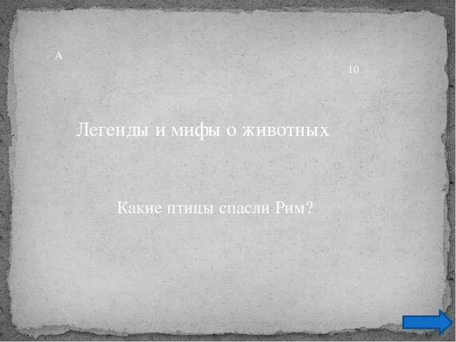 Ответ Петухи