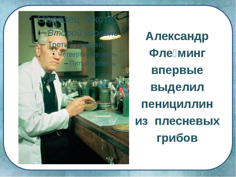 Александр Фле́минг впервые выделил пенициллин из плесневых грибов