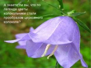 А знаете ли вы, что по легенде цветы колокольчики стали прообразом церковного