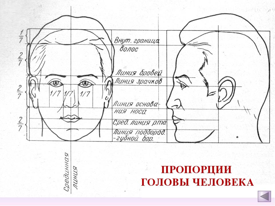 Как нарисовать голову человека