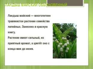 ЛАНДЫШ МАЙСКИЙ ОБЫКНОВЕННЫЙ Ландыш майский — многолетнее травянистое растение