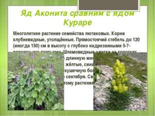 Яд Аконита сравним с ядом Кураре Многолетнее растение семейства лютиковых. Ко