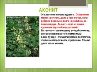 АКОНИТ Это растение сильно ядовито. Отравление может наступить даже в том слу