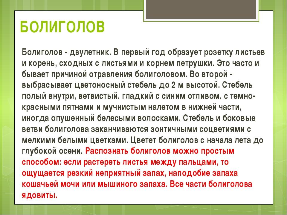 БОЛИГОЛОВ Болиголов - двулетник. В первый год образует розетку листьев и коре...