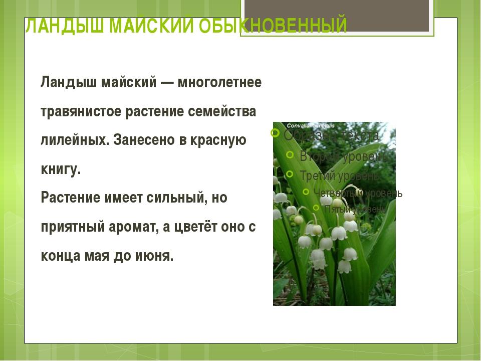 ЛАНДЫШ МАЙСКИЙ ОБЫКНОВЕННЫЙ Ландыш майский — многолетнее травянистое растение...
