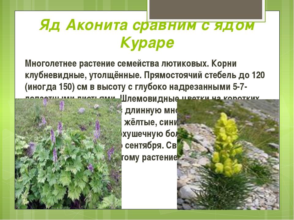 Яд Аконита сравним с ядом Кураре Многолетнее растение семейства лютиковых. Ко...