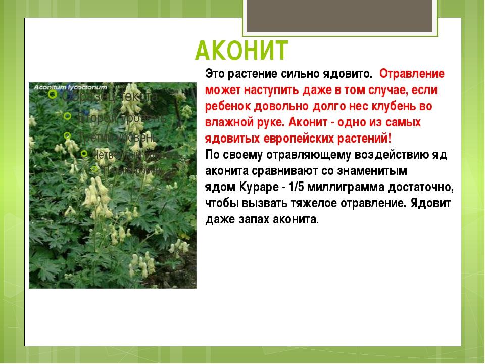 алтае ядовитые растения краснодарского края с картинками снова