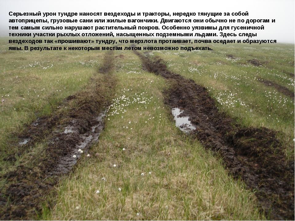 Серьезный урон тундре наносят вездеходы и тракторы, нередко тянущие за собой...
