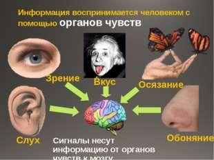 Информация воспринимается человеком с помощью органов чувств Сигналы несут ин
