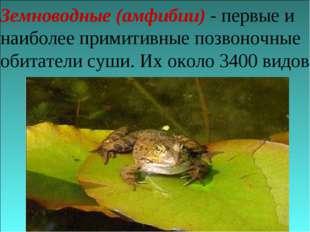 Земноводные (амфибии) - первые и наиболее примитивные позвоночные обитатели с