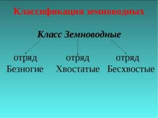 Классификация земноводных Класс Земноводные отряд отряд отряд Безногие Хвоста