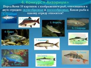 Перед Вами 10 картинок с изображением рыб, относящихся к двум отрядам: окунео