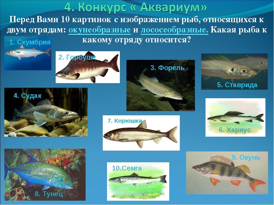 Перед Вами 10 картинок с изображением рыб, относящихся к двум отрядам: окунео...