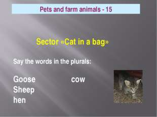 Sector «Cat in a bag» Say the words in the plurals: Goose cow Sheep hen Pets