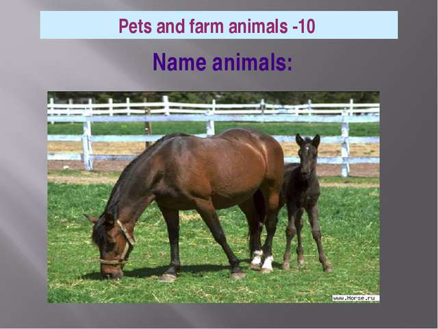 Name animals: Pets and farm animals -10