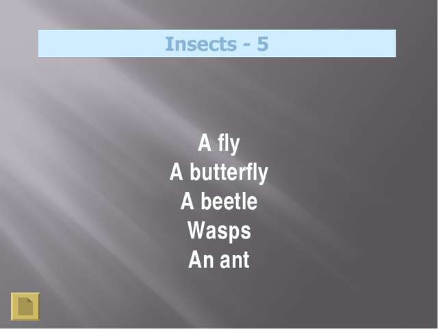 A fly A butterfly A beetle Wasps An ant