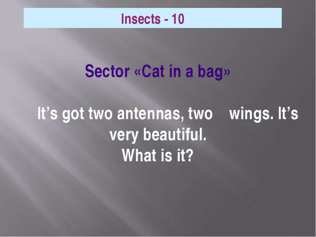 Sector «Cat in a bag» It's got two antennas, two wings. It's very beautiful....
