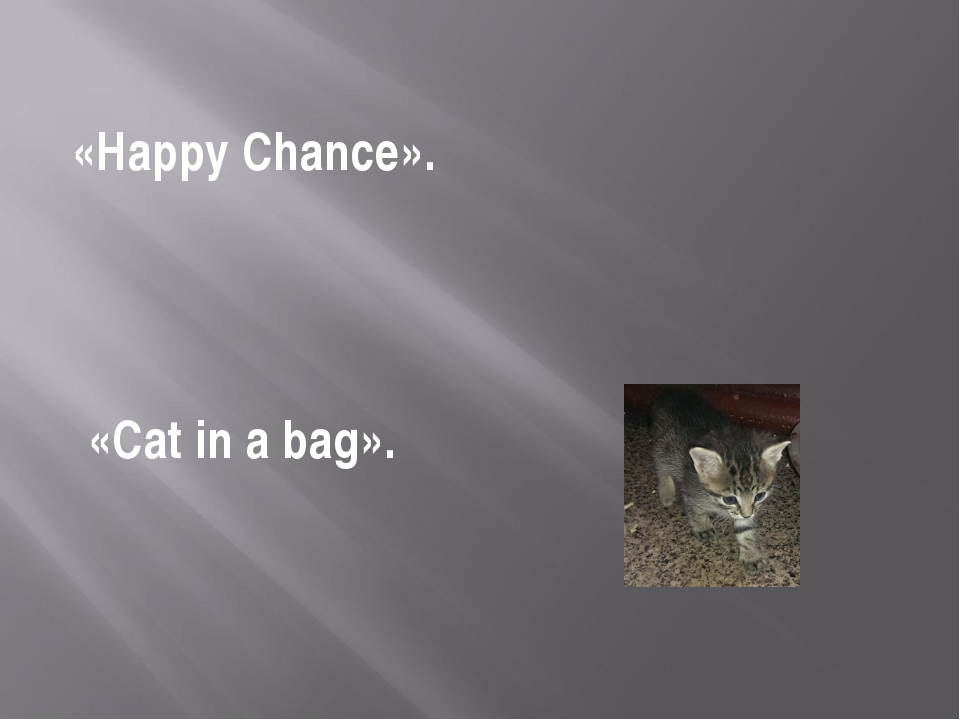 «Happy Chance». «Cat in a bag».