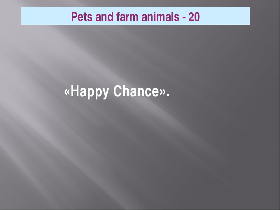 Pets and farm animals - 20 «Happy Chance».