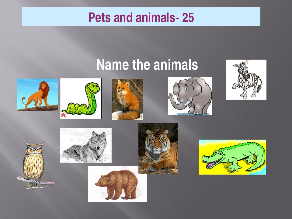 Name the animals Pets and animals- 25
