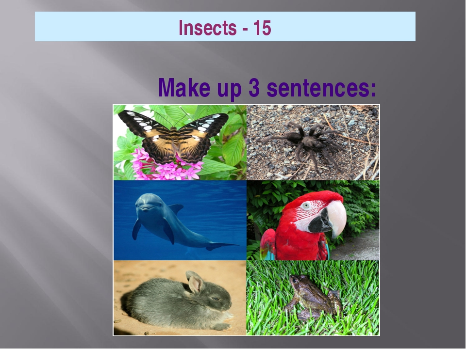 Make up 3 sentences: Insects - 15