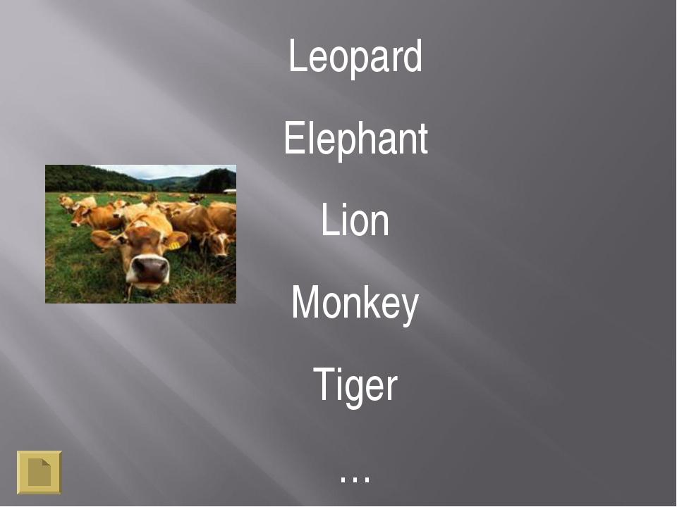 Leopard Elephant Lion Monkey Tiger … …