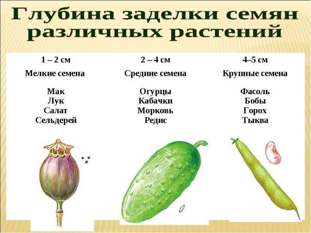 1 – 2 см2 – 4 см4–5 см Мелкие семена Средние семенаКрупные семена Мак...