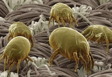 Что такое аллегрия на пылевые клещи и как от них избавиться