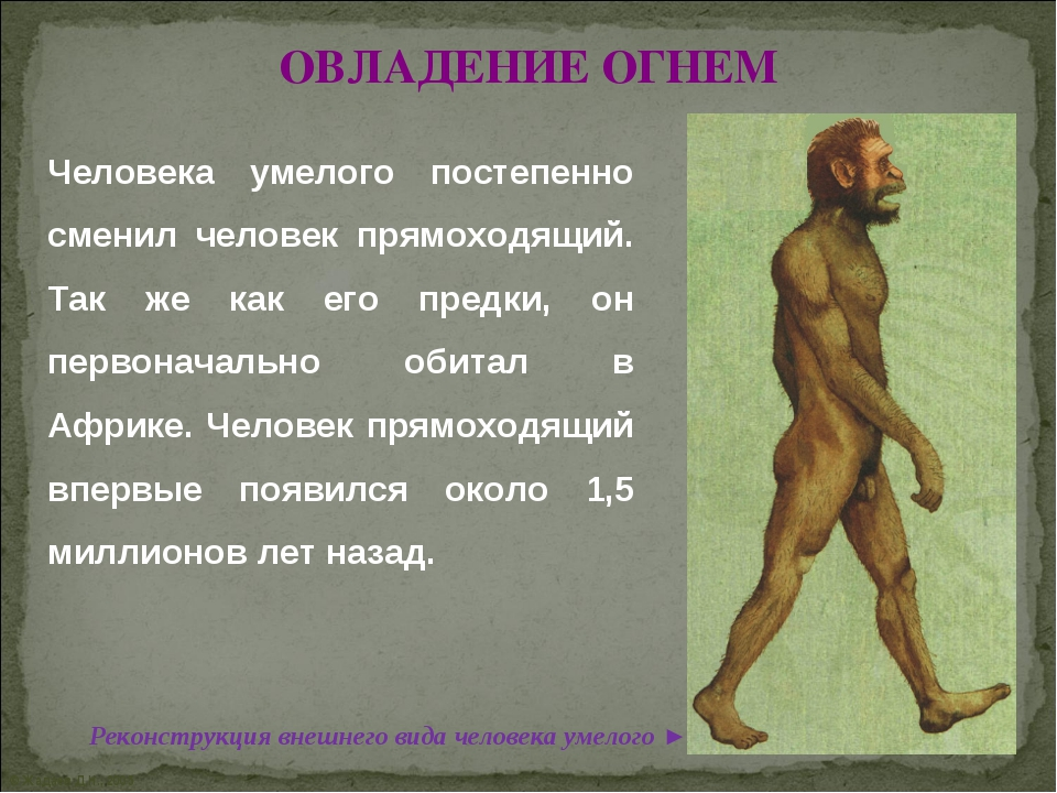 © Жадаев Д.Н., 2005 ОВЛАДЕНИЕ ОГНЕМ Человека умелого постепенно сменил челове...