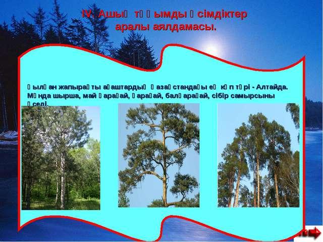 IV. Ашық тұқымды өсімдіктер аралы аялдамасы. Қылқан жапырақты ағаштардың Қаза...