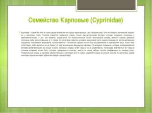 Семейство Карповые (Cyprinidae) Карповые – самое богатое по числу видов семей